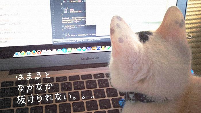 お名前ドットコム共用サーバーSDでのDB設定まとめ!(phpMyAdmin設定)